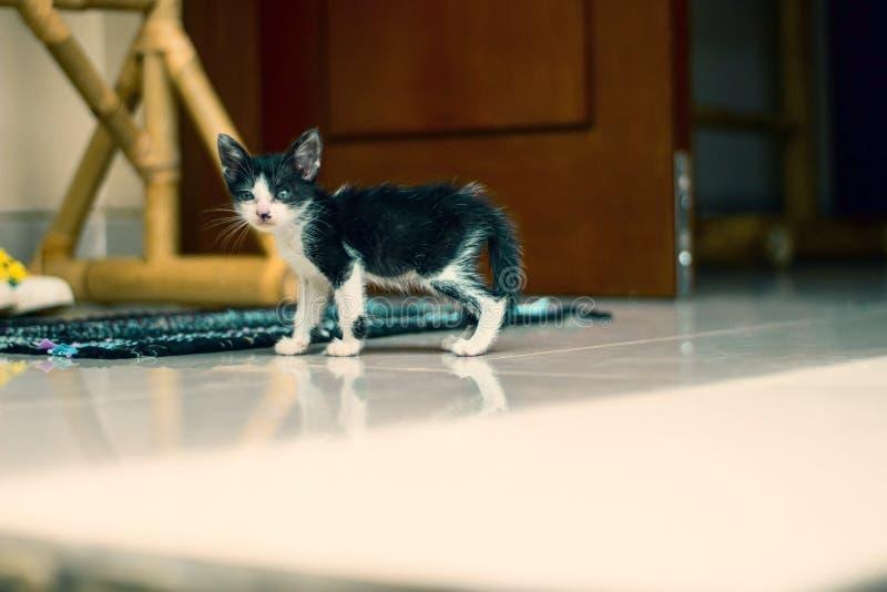 Pouco gatinho preto e branco foi para uma caminhada fotografia de stock royalty free