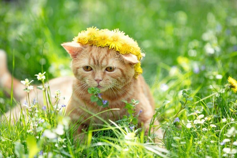 Pouco gatinho vermelho coroado com chaplet da flor fotos de stock royalty free