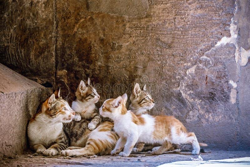 Pouco gatinhos é jogado na mamã em escadas do granito na mesquita foto de stock