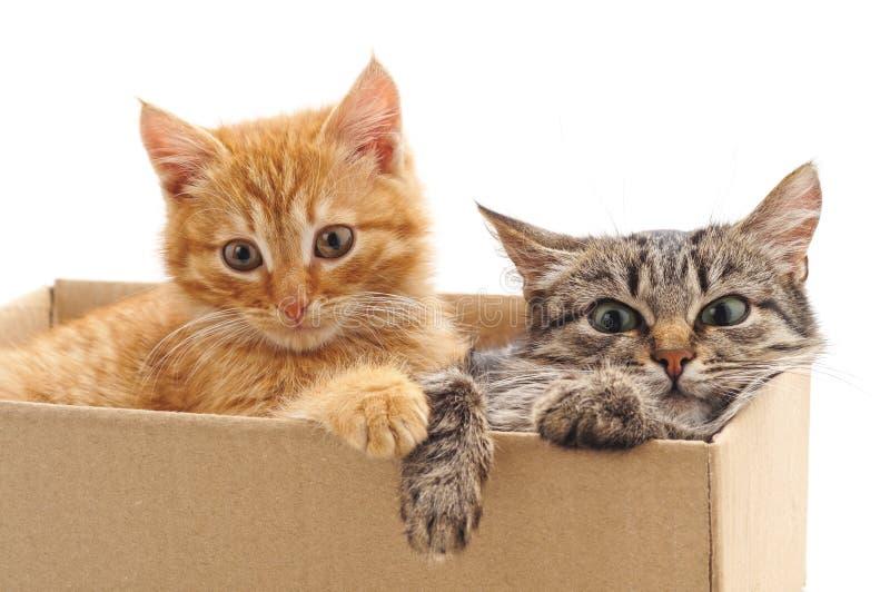 Pouco gatinhos na caixa fotografia de stock royalty free