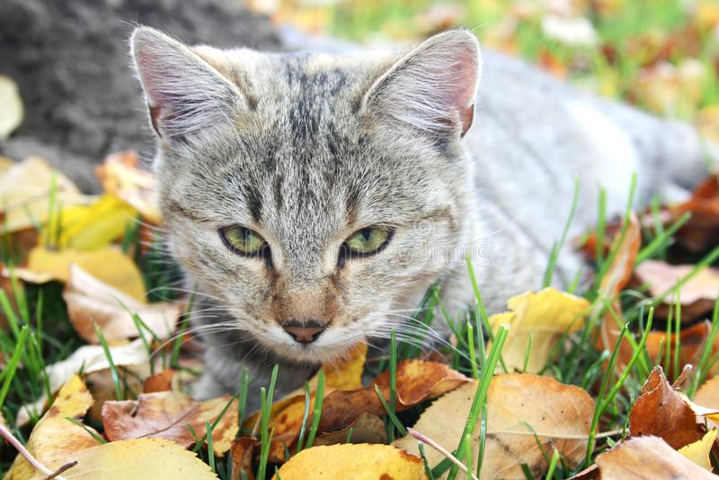 Pouco gato doce no jardim foto de stock