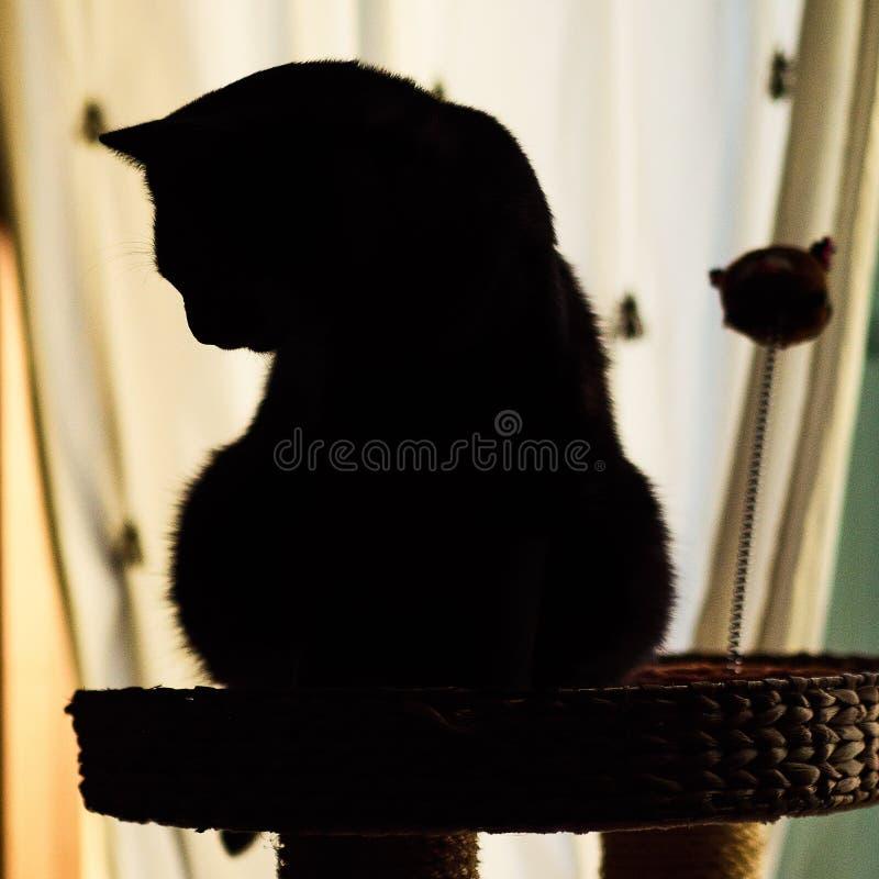 Pouco gato peludo imagens de stock royalty free
