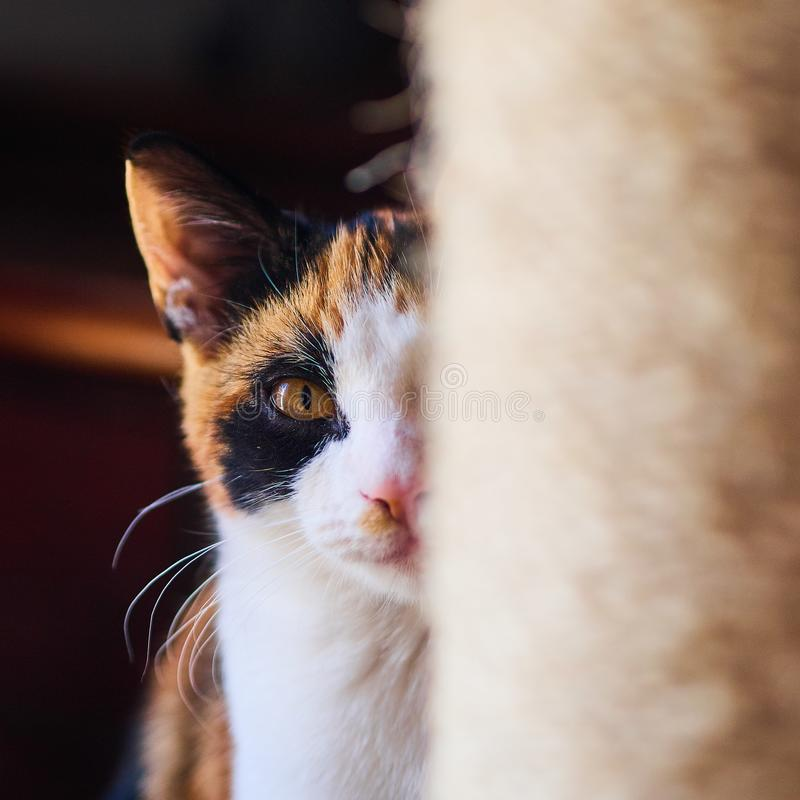 Pouco gato peludo imagens de stock