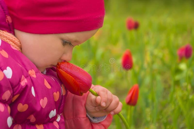 Pouco menina adorável que aspira a flor da tulipa no dia de mola adiantado fotografia de stock royalty free