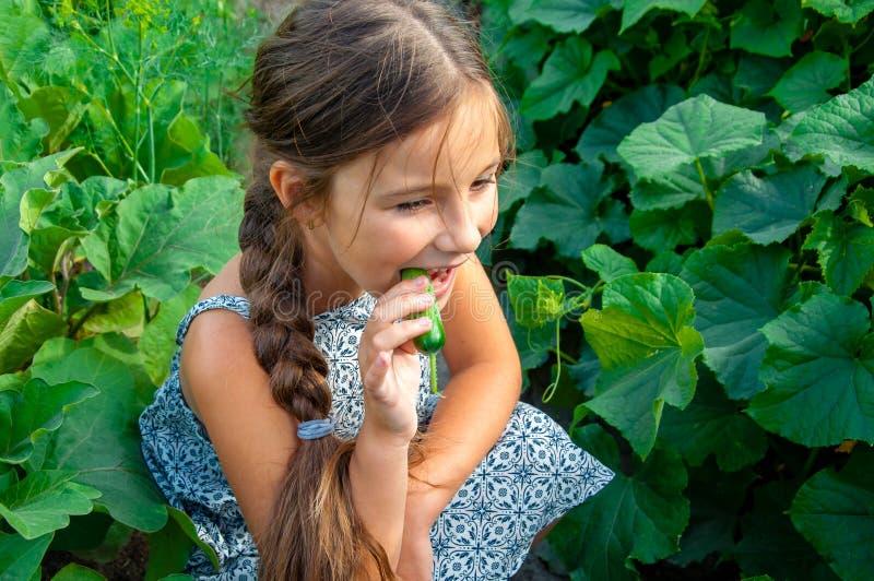Pouco menina bonito com uma trança longa, comendo um pepino arrancado do jardim fotografia de stock royalty free