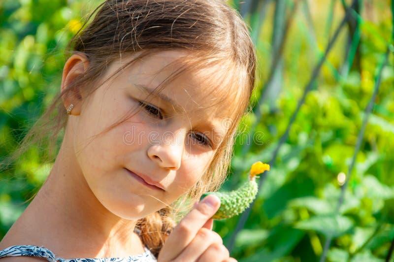 Pouco menina bonito com uma trança longa, comendo um pepino arrancado do jardim fotos de stock royalty free