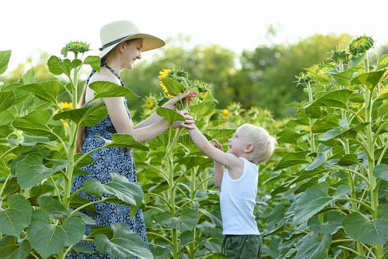 Pouco menino louro dá a sua mãe feliz uma flor do girassol na perspectiva de um campo de florescência Close-up imagens de stock royalty free