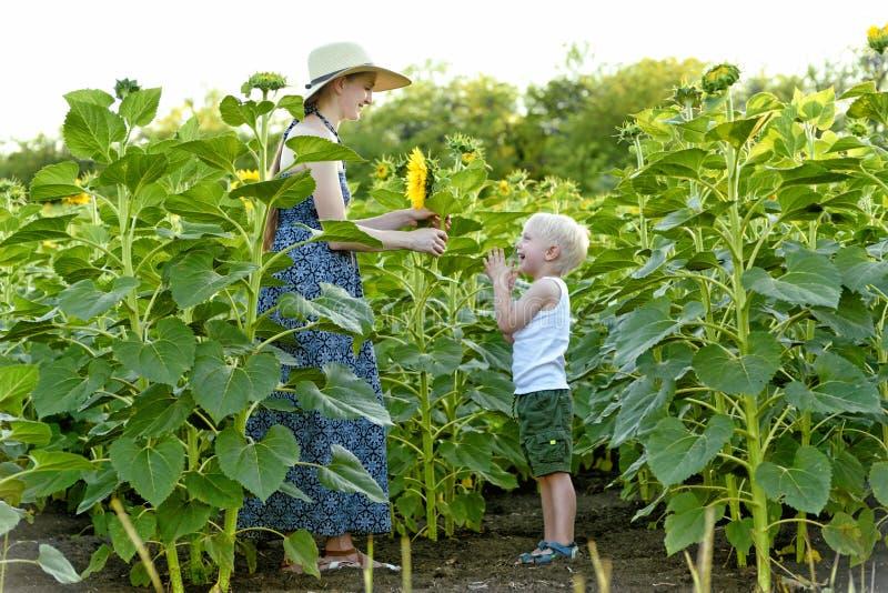 Pouco menino louro dá a sua mãe uma flor do girassol na perspectiva de um campo de florescência imagem de stock