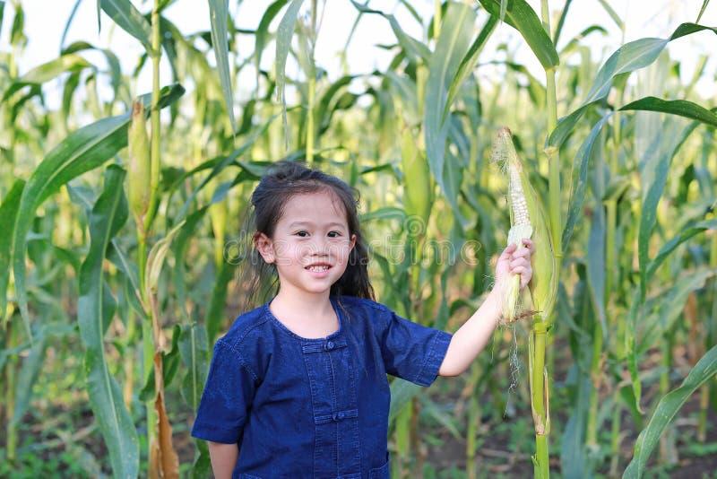 Pouco milho fresco da colheita do fazendeiro na plantação da agricultura imagens de stock