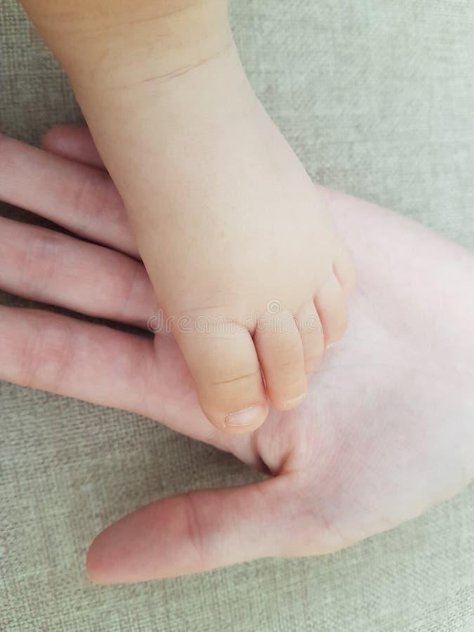 Pouco ninho do bebê na palma de sua mão da mamã imagens de stock