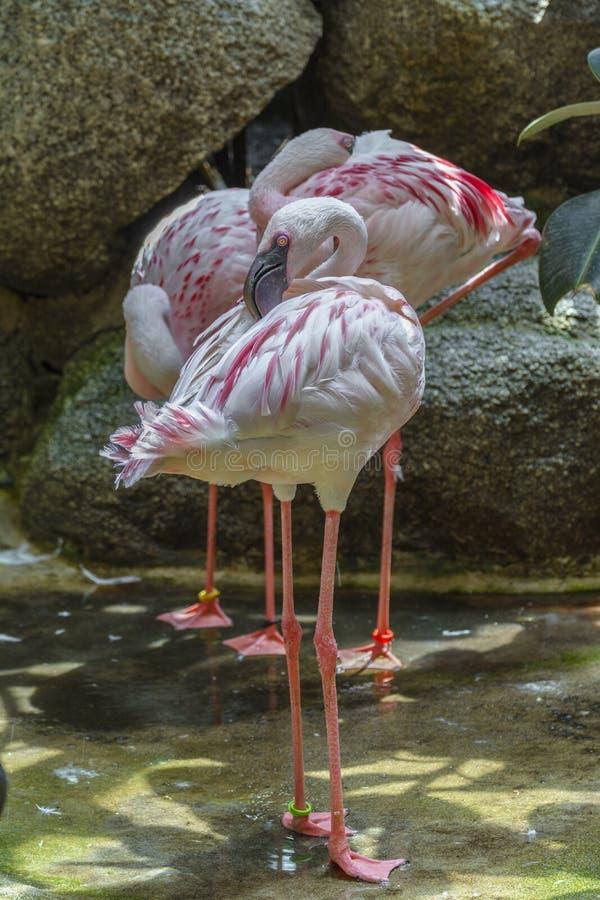 Pouco pássaro do flamingo imagens de stock royalty free