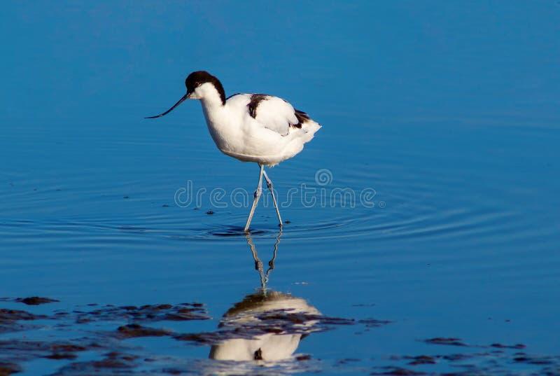 Pouco pássaro no lago no dia ensolarado nafta fotografia de stock