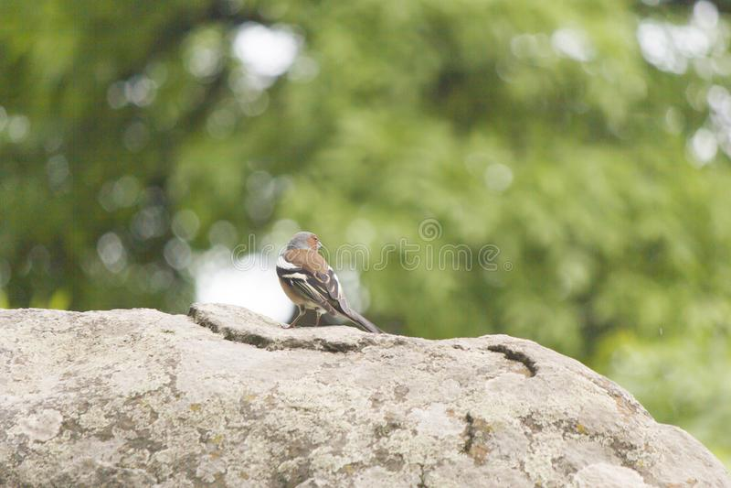 Pouco passarinho em uma árvore foto de stock royalty free