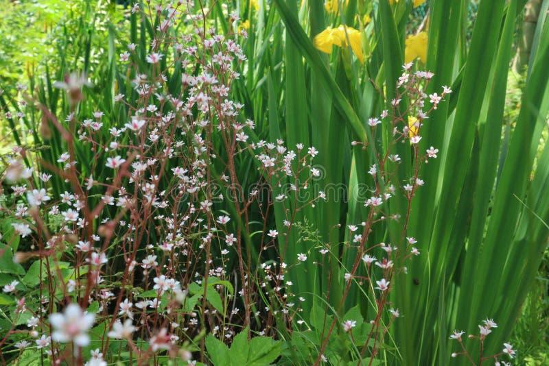 Pouco prado floresce em um fundo da grama verde para o projeto imagens de stock royalty free