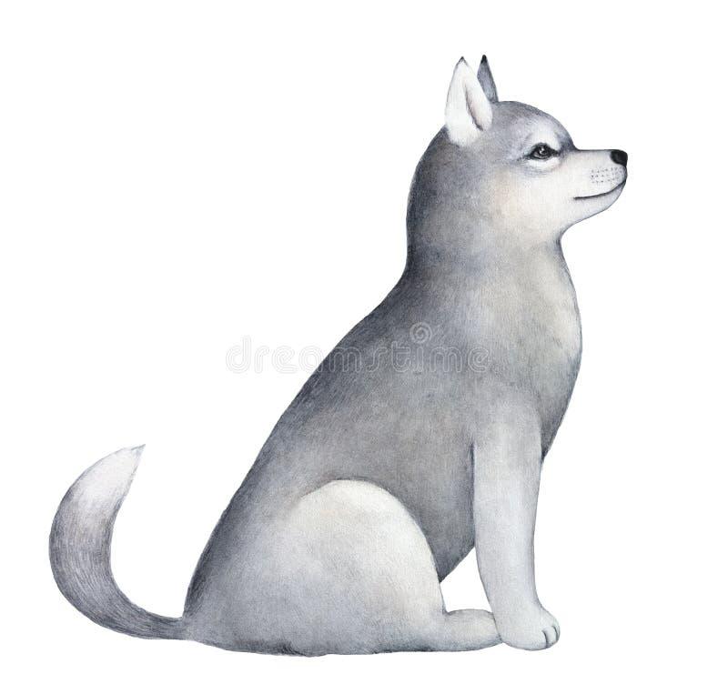 Pouco retrato bonito do caráter do cachorrinho do cão de trenó ilustração stock
