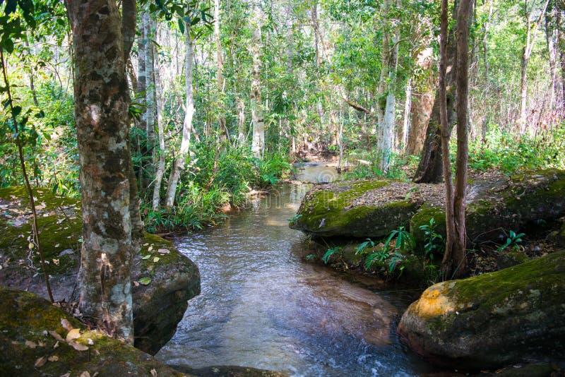 Pouco rio cai fundo bonito da natureza imagens de stock royalty free