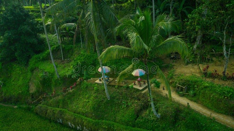 Pouco terraço a relaxar entre os campos do arroz imagens de stock royalty free