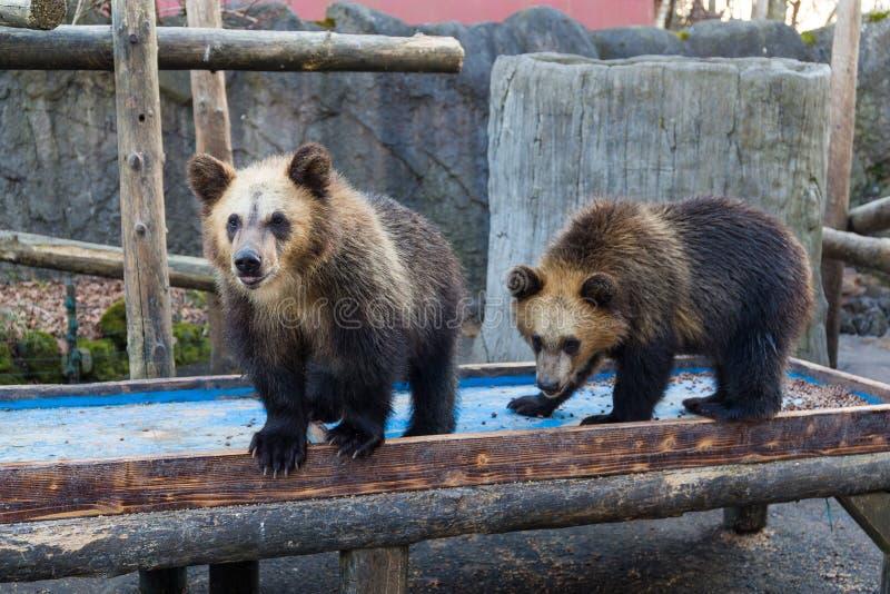 Pouco urso no jardim zoológico imagens de stock