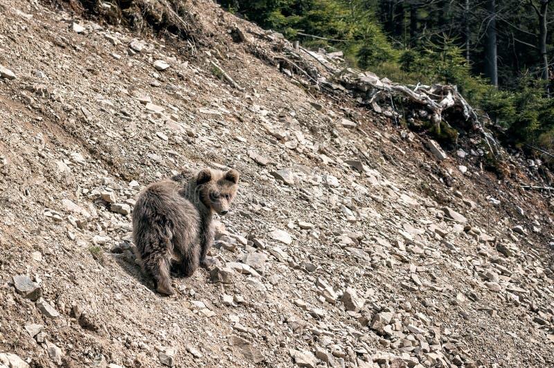 Pouco urso no monte fotos de stock royalty free