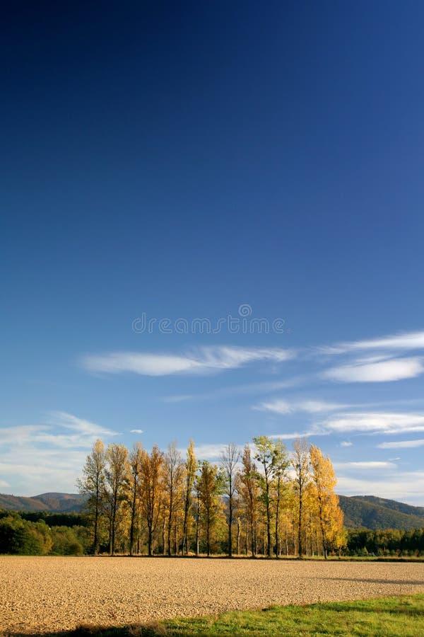 Poucos árvores e acre imagens de stock