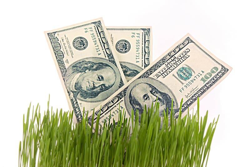 Poucos dólares na grama verde isolada imagens de stock royalty free