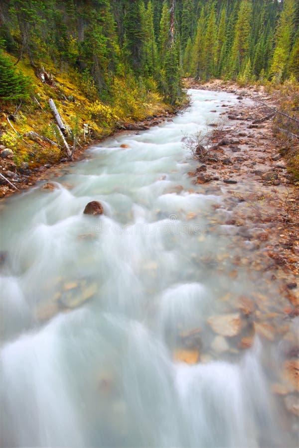 Poucos Rapids Canadá do rio de Yoho fotografia de stock