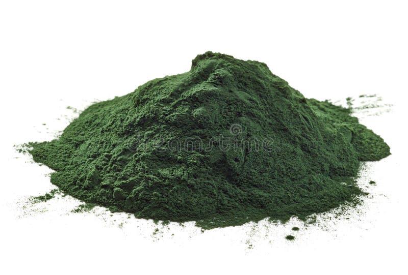 Poudre d'algues de Spirulina photos libres de droits