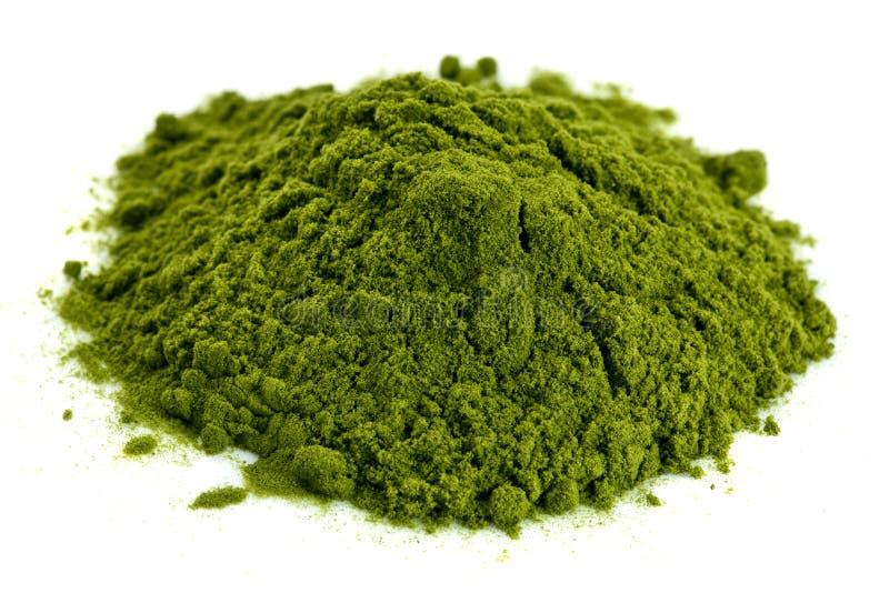 Poudre organique lyophilisée d'herbe de blé photographie stock