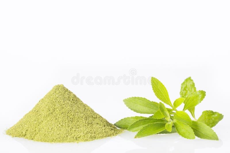 Poudre verte fraîche d'herbe et d'extrait de Stevia - rebaudiana de Stevia Fond blanc photo stock