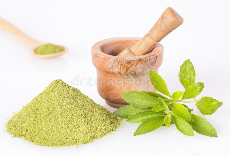 Poudre verte fraîche d'herbe et d'extrait de Stevia - rebaudiana de Stevia Fond blanc images libres de droits