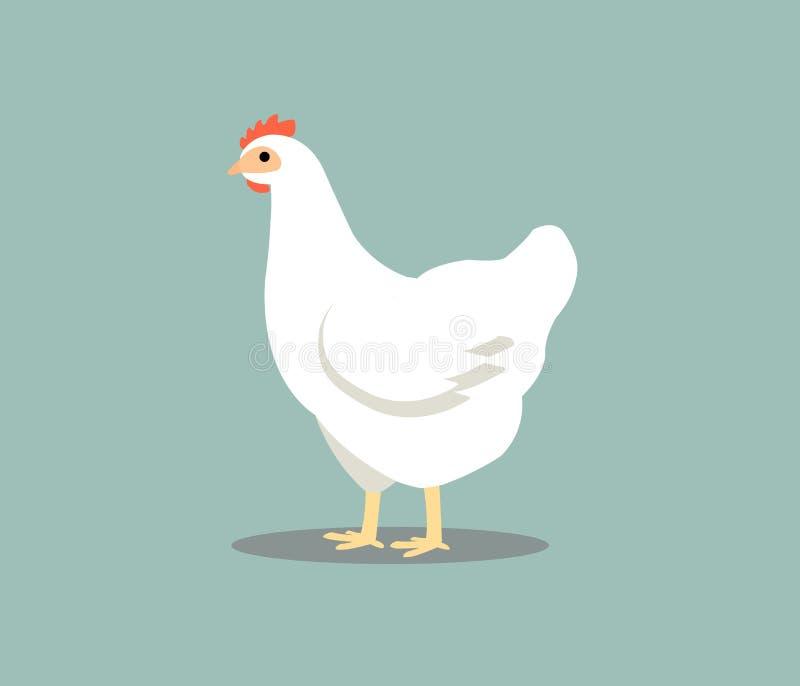 Poule blanche d'isolement sur le fond gris Illustration de vecteur de poulet en couleurs illustration libre de droits