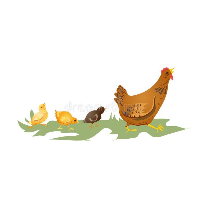 Poule brune mignonne de mère marchant avec des enfants de poulet illustration libre de droits