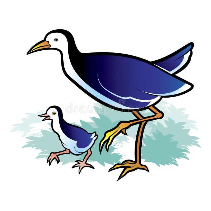 poule d'eau de bébé et marche de poule d'eau de mère illustration de vecteur