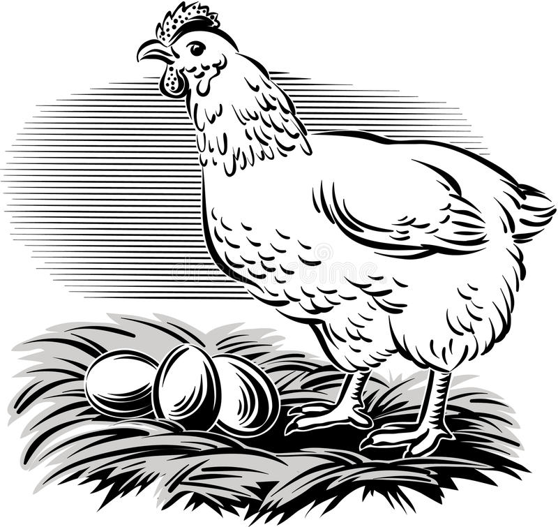 Poule dans le nid illustration stock