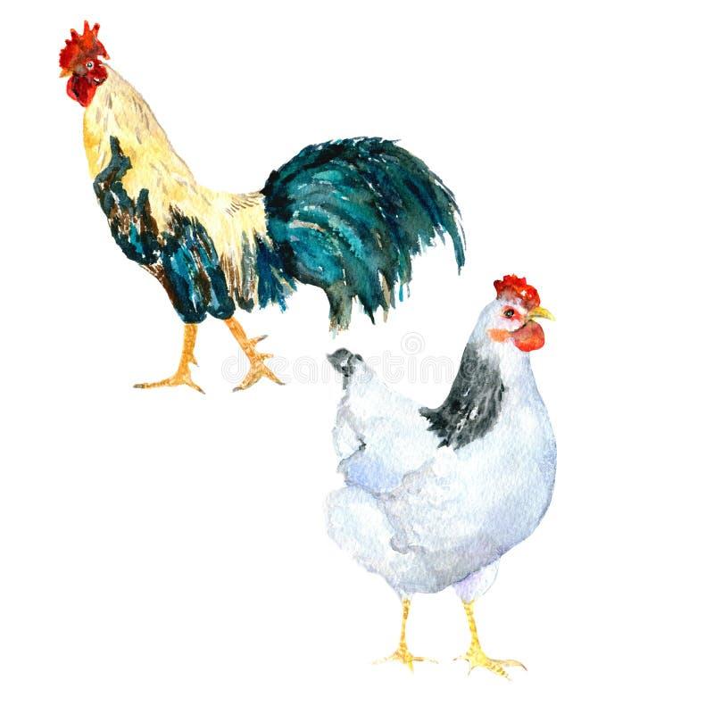 Poule et coq photo stock