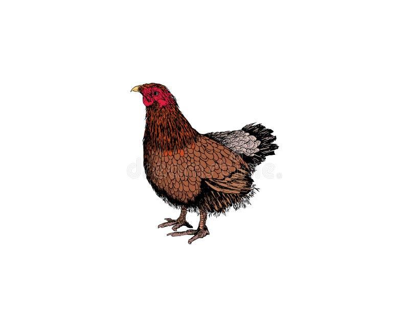 Poule ou poulet dessiné avec les lignes approximatives dans la gravure sur bois en cru ou le style graver à l'eau-forte Oiseau co illustration de vecteur