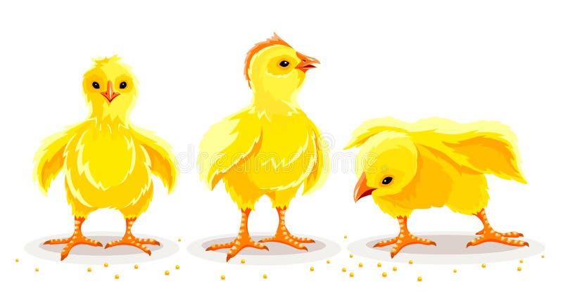 Poulet de poule Petits oiseaux domestiques nouveau-nés de volaille Illustration de vecteur illustration libre de droits