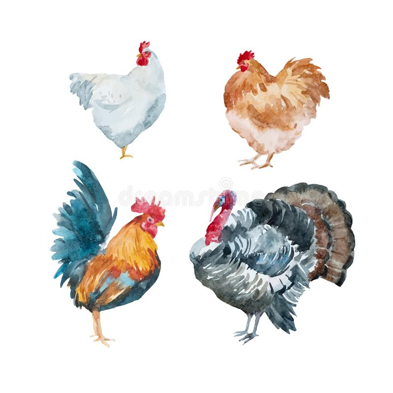 Poulet de vecteur d'aquarelle, coq, dinde illustration libre de droits