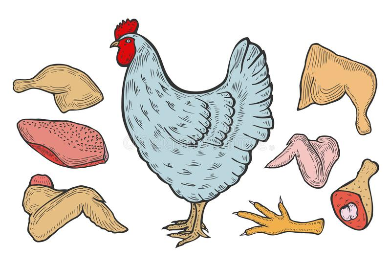 Poulet de vecteur et viande cutted illustration de vecteur