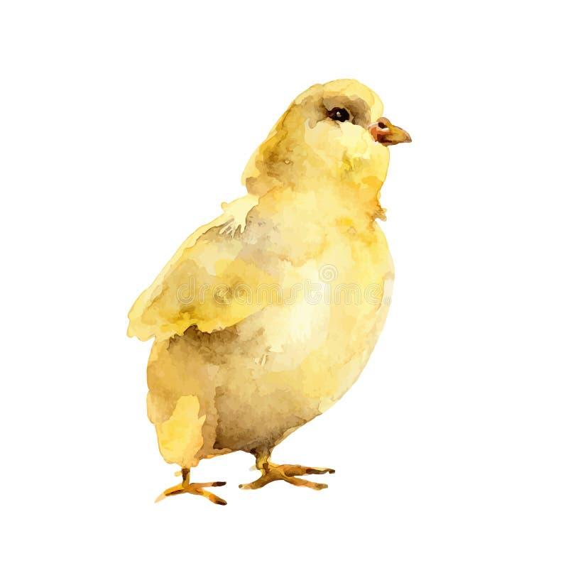 Poulet jaune d'aquarelle sur le fond blanc illustration stock