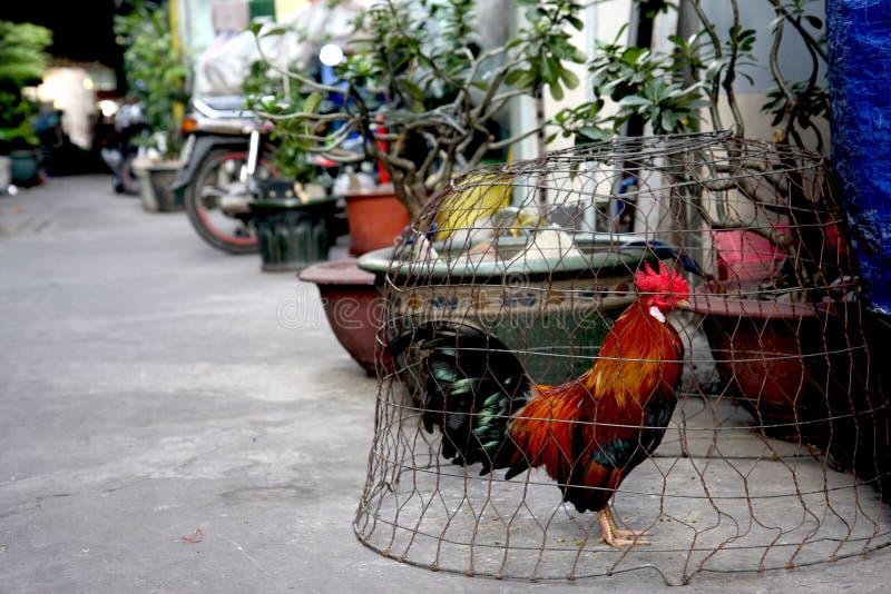Poulet mis en cage sur la rue de ville images libres de droits