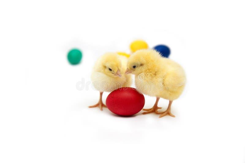 poulet Pâques photo libre de droits