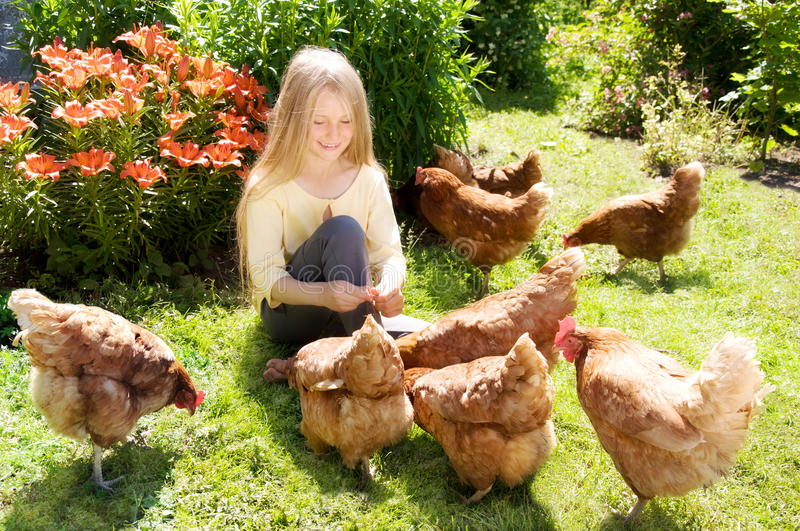 Poulets alimentants de fille images stock