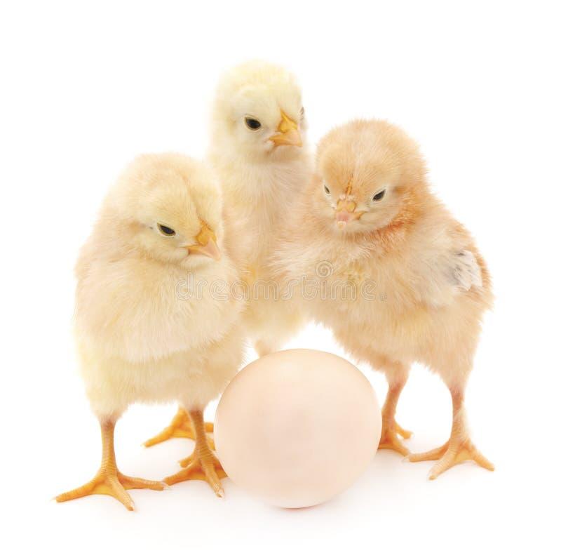 Poulets avec l'oeuf image libre de droits