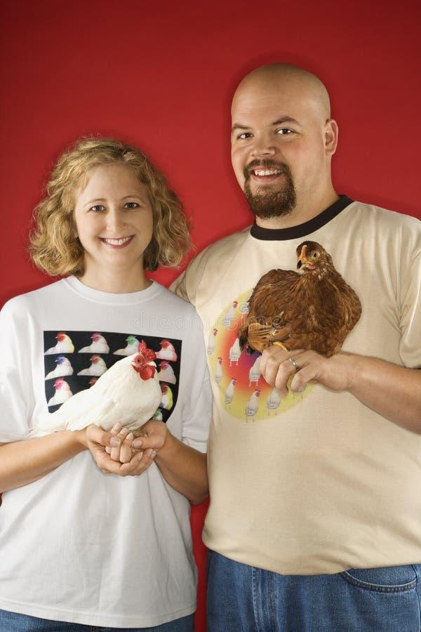 Poulets caucasiens de fixation de mâle et de femelle. photographie stock