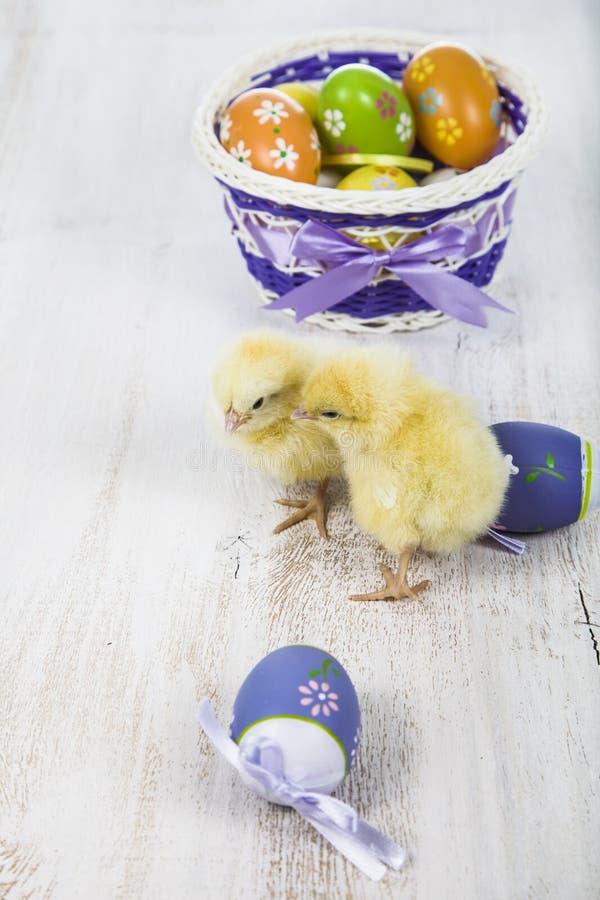 Poulets et oeufs de pâques jaunes photographie stock libre de droits