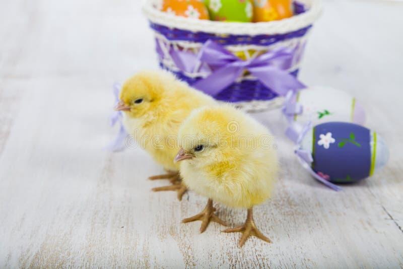 Poulets et oeufs de pâques jaunes images stock