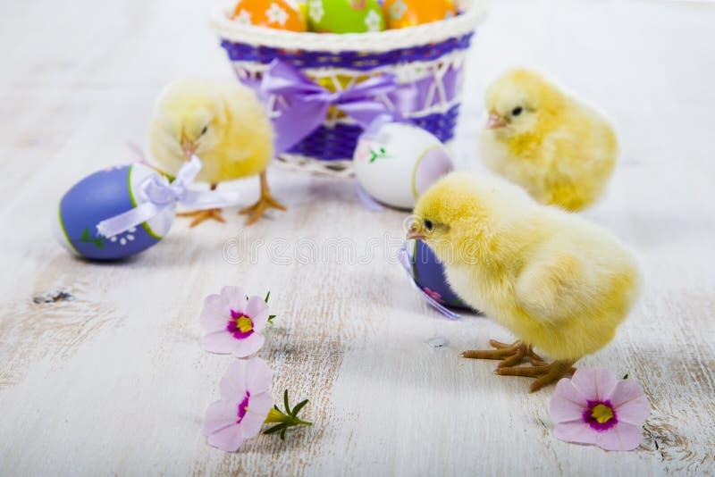 Poulets et oeufs de pâques jaunes image libre de droits