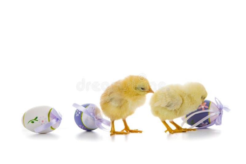 Poulets et oeufs de pâques jaunes photo libre de droits