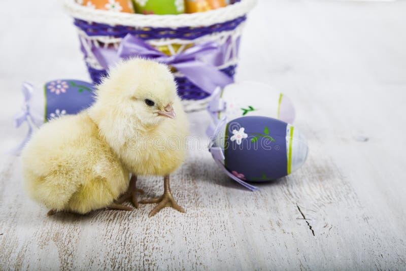 Poulets et oeufs de pâques jaunes photos libres de droits